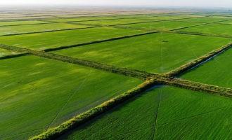 2019г  Спрос на краснодарский рис растет. Почему так?