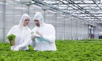 Правильно ли мы питаемся? Стоит ли покупать ГМО продукты?