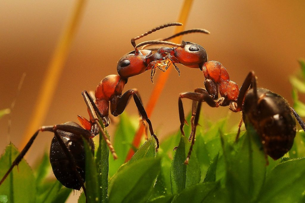 Как правильно бороться с насекомыми?