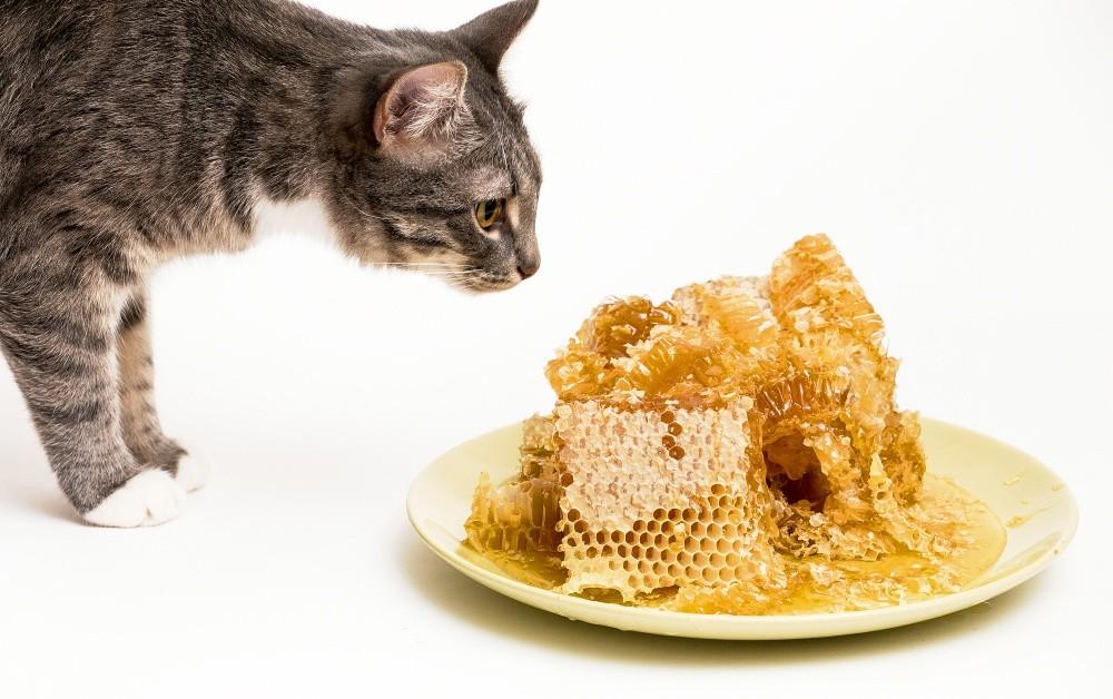 """3 месяца ел мёд и больше ничего.... """"Да, загадочная штука этот мёд..."""""""